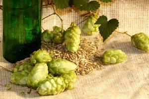 Hoa bia thành phần không thể thiếu trong bia thủ công